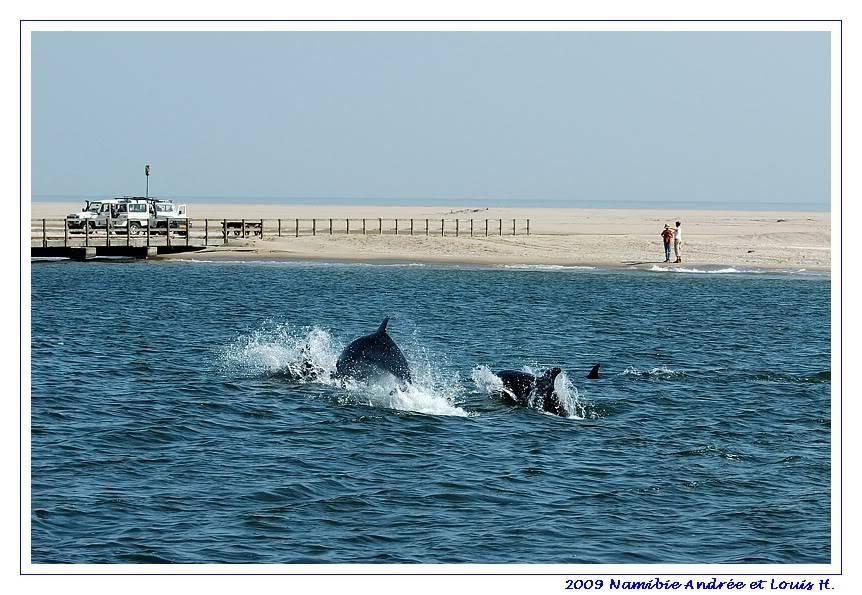 Aventures en Namibie Partie 2 : De Walvis Bay à Etosha DSC_9854
