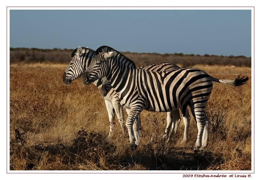Aventures en Namibie Partie 2 : De Walvis Bay à Etosha DSC_9910PF