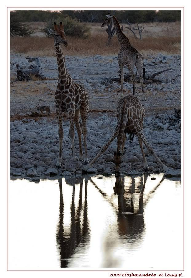 Aventures en Namibie Partie 2 : De Walvis Bay à Etosha DSC_9929PF