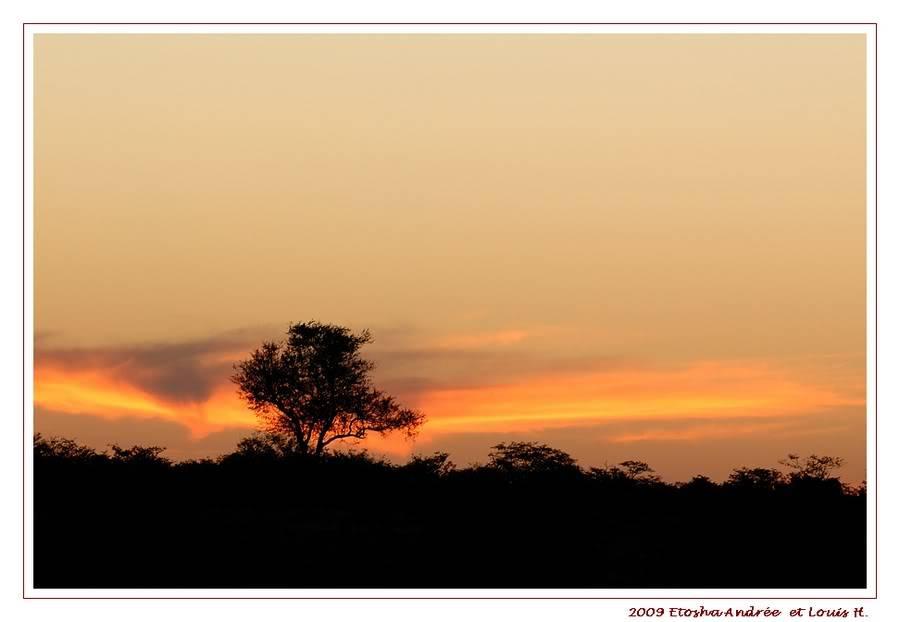 Aventures en Namibie Partie 2 : De Walvis Bay à Etosha DSC_9937PF