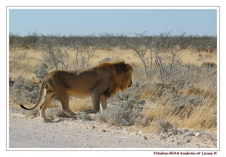 Aventures en Namibie Partie 2 : De Walvis Bay à Etosha DSC_9958PF