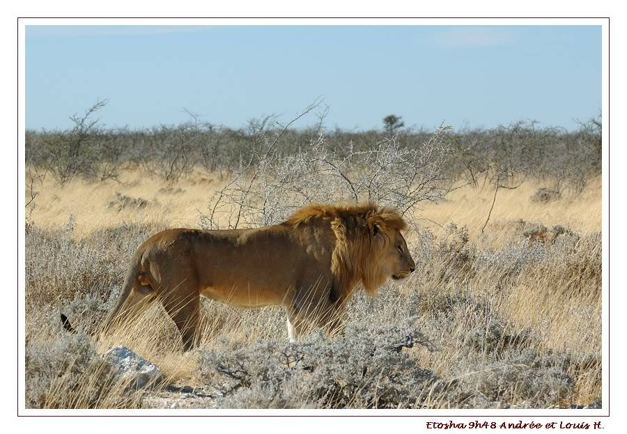 Aventures en Namibie Partie 2 : De Walvis Bay à Etosha DSC_9959PF