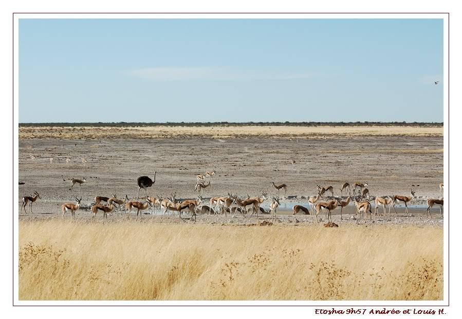Aventures en Namibie Partie 2 : De Walvis Bay à Etosha DSC_9961PF