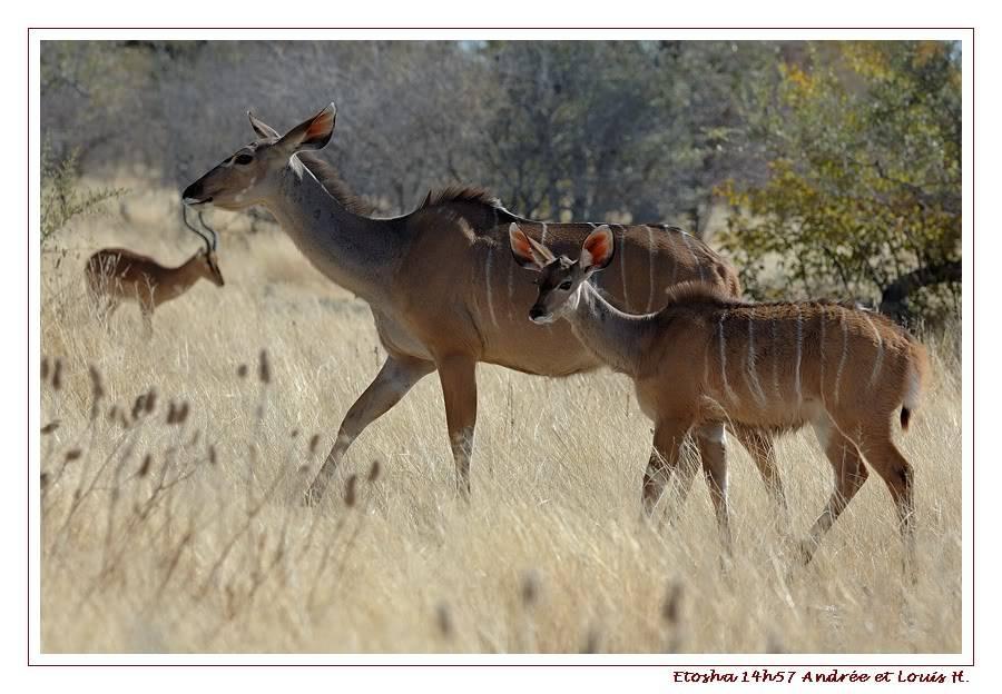 Aventures en Namibie Partie 2 : De Walvis Bay à Etosha DSC_9967PF