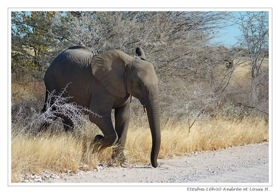 Aventures en Namibie Partie 2 : De Walvis Bay à Etosha DSC_9977PF