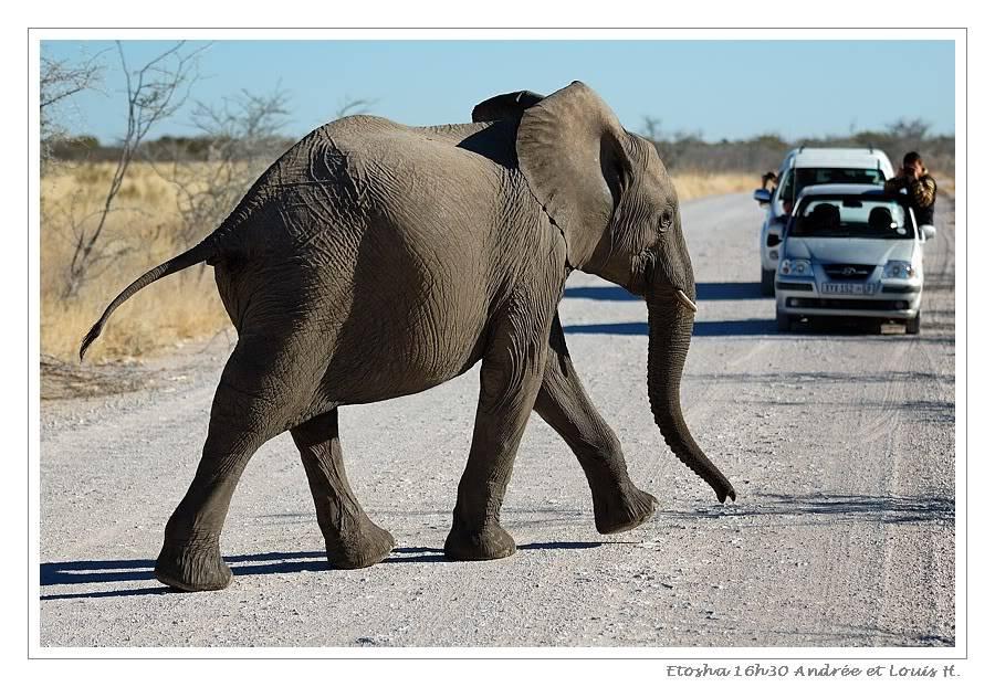 Aventures en Namibie Partie 2 : De Walvis Bay à Etosha DSC_9979PF