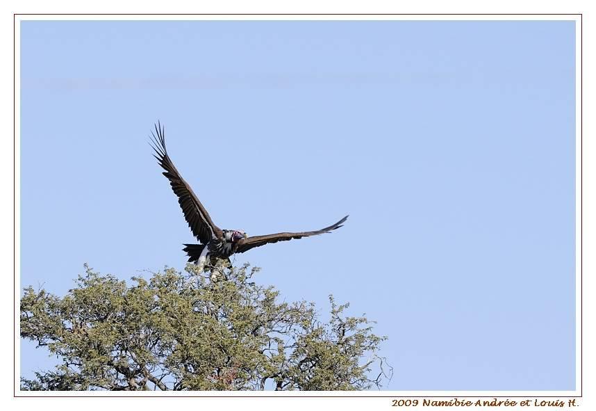 Aventures en Namibie Partie 1: De Windhoek à Sossusvlei _DSC5708