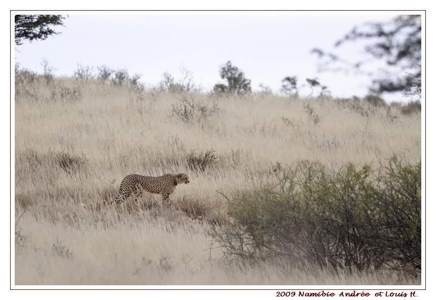 Aventures en Namibie Partie 1: De Windhoek à Sossusvlei _DSC5835