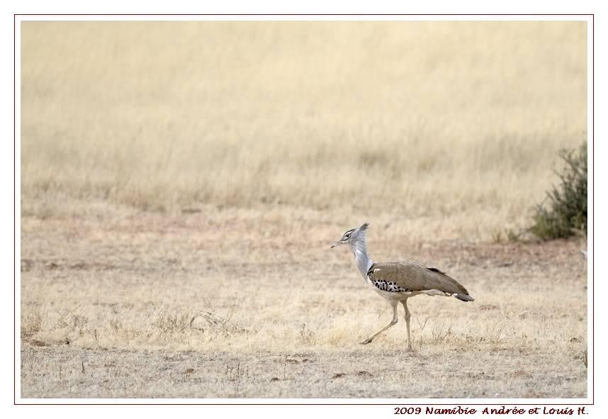 Aventures en Namibie Partie 1: De Windhoek à Sossusvlei _DSC5906