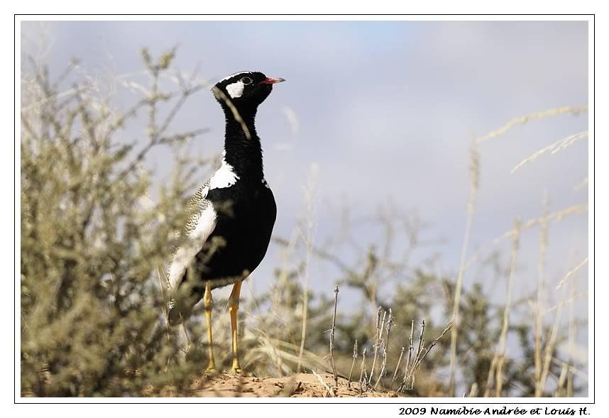 Aventures en Namibie Partie 1: De Windhoek à Sossusvlei _DSC6129