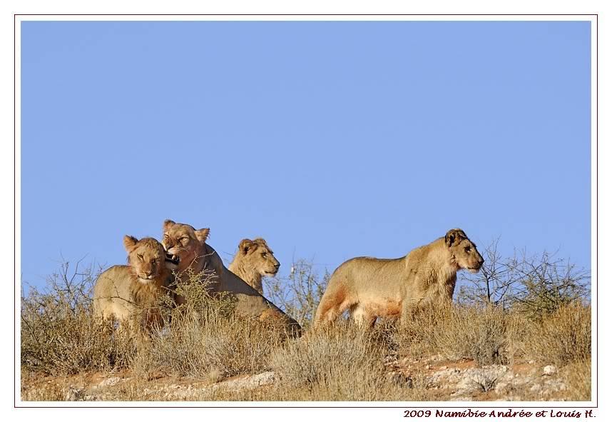 Aventures en Namibie Partie 1: De Windhoek à Sossusvlei _DSC6259