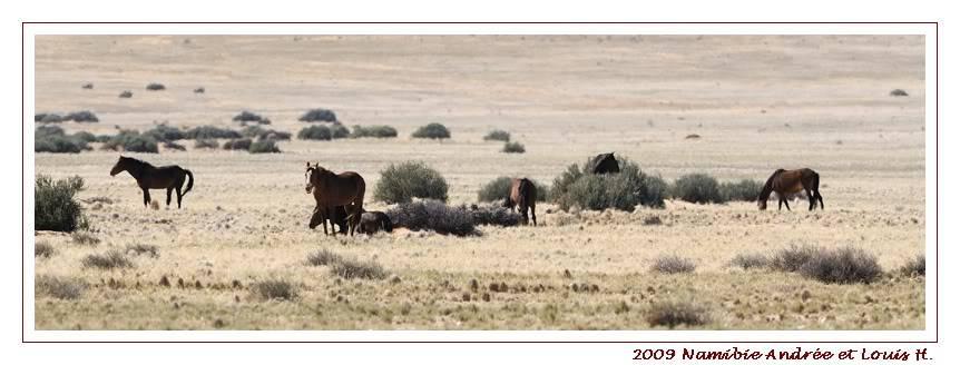 Aventures en Namibie Partie 1: De Windhoek à Sossusvlei _DSC6304