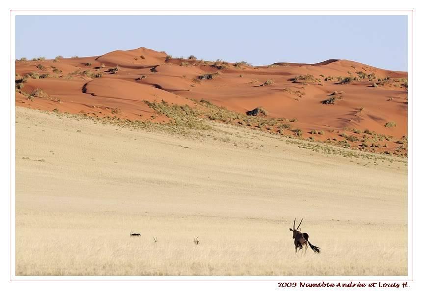 Aventures en Namibie Partie 1: De Windhoek à Sossusvlei _DSC6322