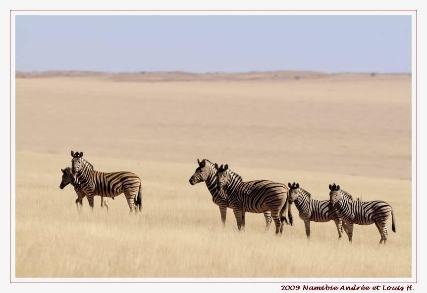 Aventures en Namibie Partie 1: De Windhoek à Sossusvlei _DSC6328