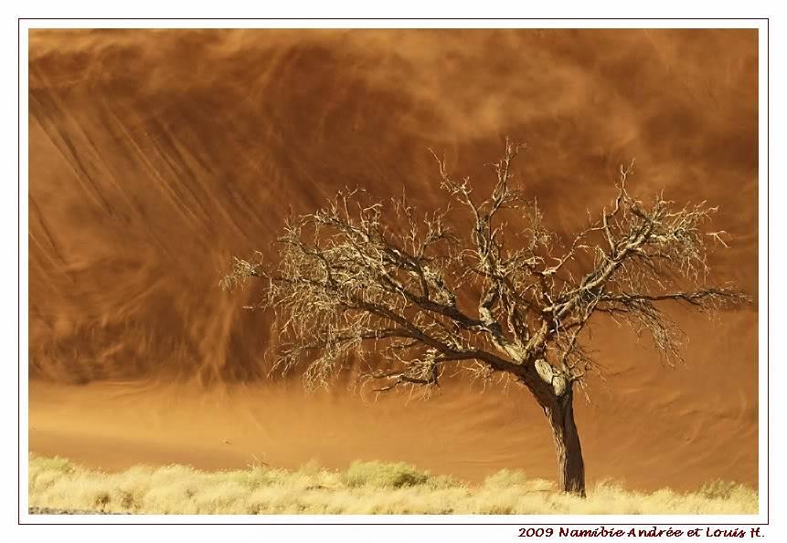 Aventures en Namibie Partie 1: De Windhoek à Sossusvlei _DSC6332pscn
