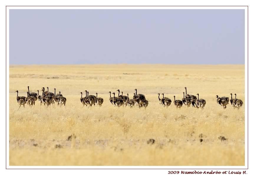Aventures en Namibie Partie 2 : De Walvis Bay à Etosha _DSC6350