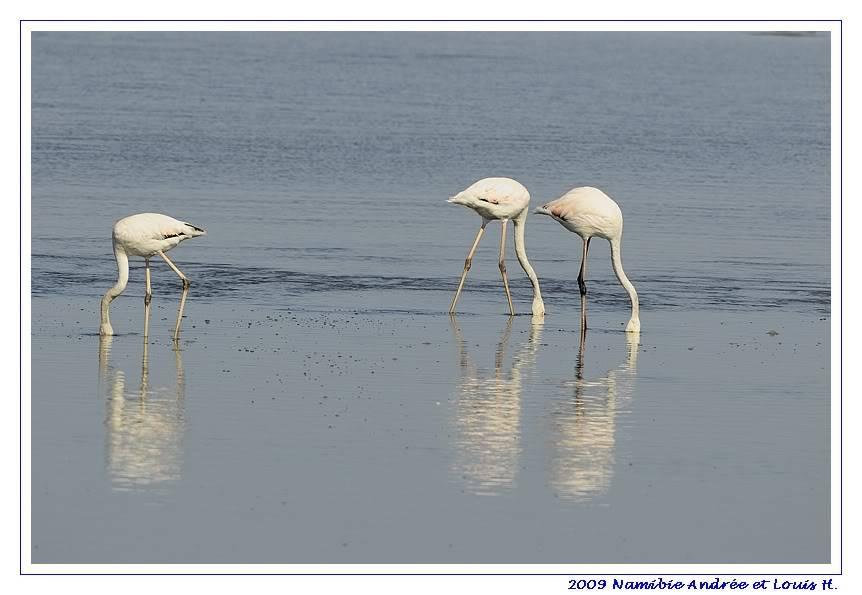 Aventures en Namibie Partie 2 : De Walvis Bay à Etosha _DSC6370