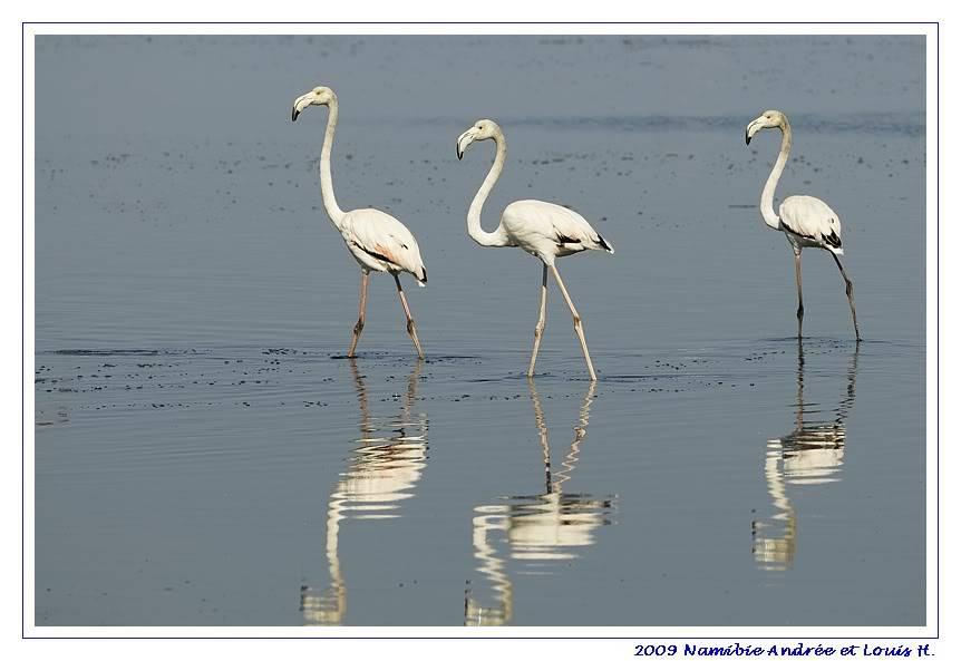 Aventures en Namibie Partie 2 : De Walvis Bay à Etosha _DSC6371