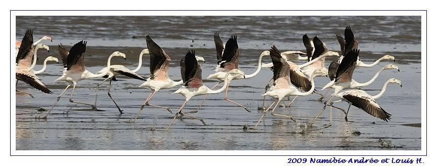 Aventures en Namibie Partie 2 : De Walvis Bay à Etosha _DSC6372