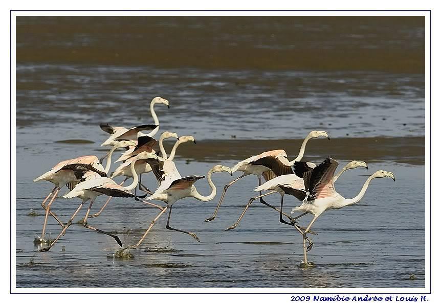 Aventures en Namibie Partie 2 : De Walvis Bay à Etosha _DSC6373