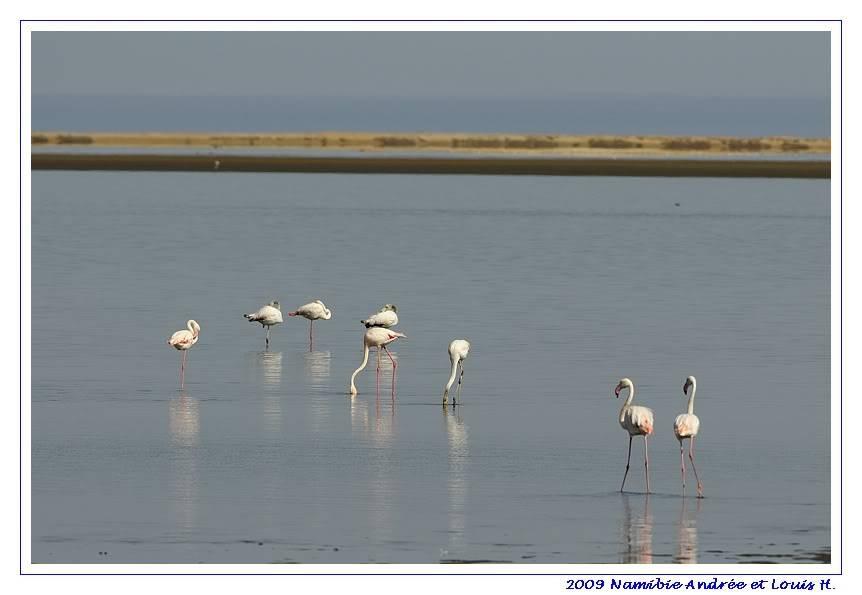 Aventures en Namibie Partie 2 : De Walvis Bay à Etosha _DSC6377