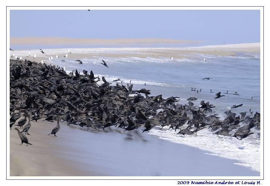 Aventures en Namibie Partie 2 : De Walvis Bay à Etosha _DSC6397-1