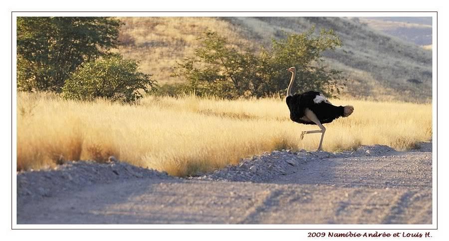 Aventures en Namibie Partie 2 : De Walvis Bay à Etosha _DSC6462PF