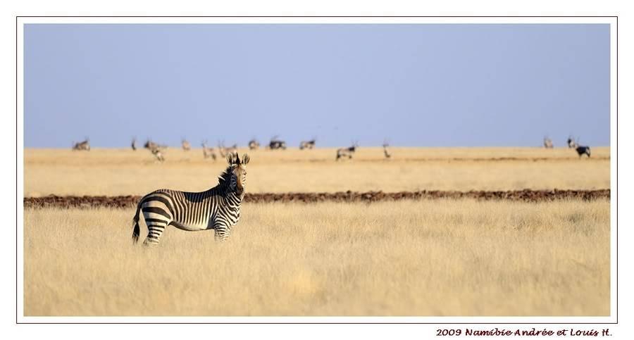 Aventures en Namibie Partie 2 : De Walvis Bay à Etosha _DSC6489PF