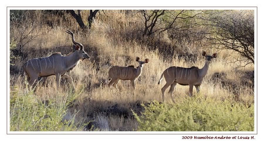 Aventures en Namibie Partie 2 : De Walvis Bay à Etosha _DSC6517PF
