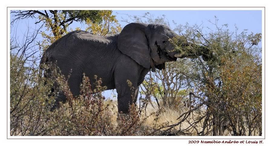 Aventures en Namibie Partie 2 : De Walvis Bay à Etosha _DSC6534PF