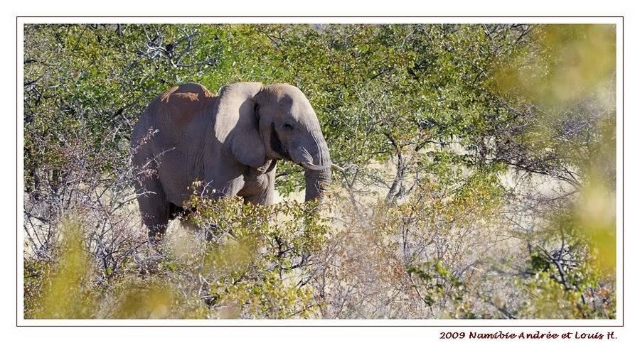 Aventures en Namibie Partie 2 : De Walvis Bay à Etosha _DSC6568PF