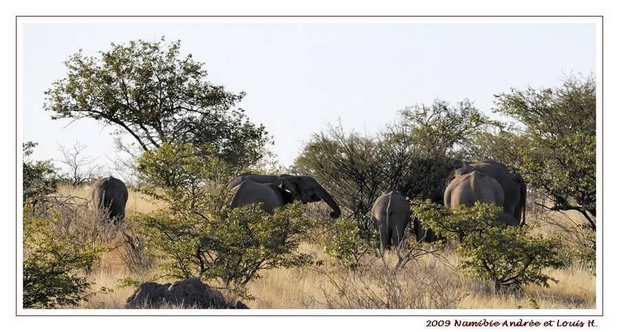 Aventures en Namibie Partie 2 : De Walvis Bay à Etosha _DSC6584PF