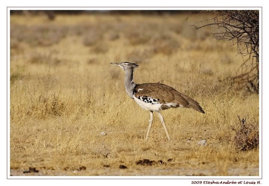 Aventures en Namibie Partie 2 : De Walvis Bay à Etosha _DSC6605PF