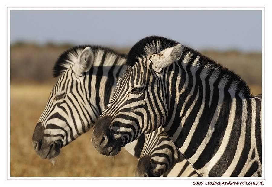 Aventures en Namibie Partie 2 : De Walvis Bay à Etosha _DSC6609PF
