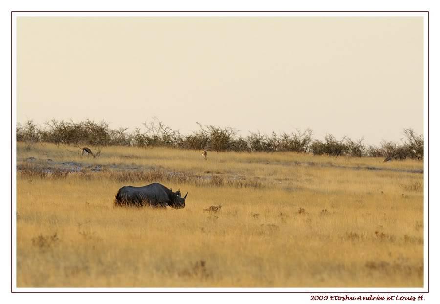 Aventures en Namibie Partie 2 : De Walvis Bay à Etosha _DSC6621PF