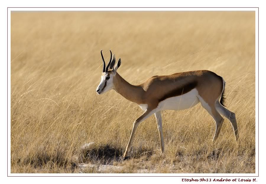 Aventures en Namibie Partie 2 : De Walvis Bay à Etosha _DSC6661PF