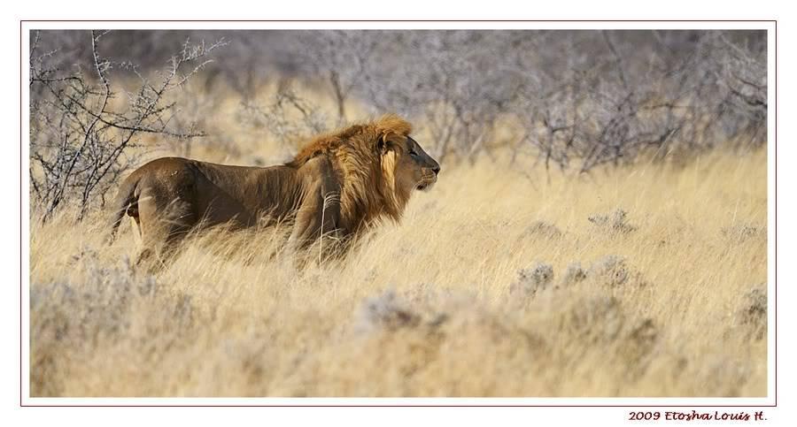 Aventures en Namibie Partie 2 : De Walvis Bay à Etosha _DSC6667PF