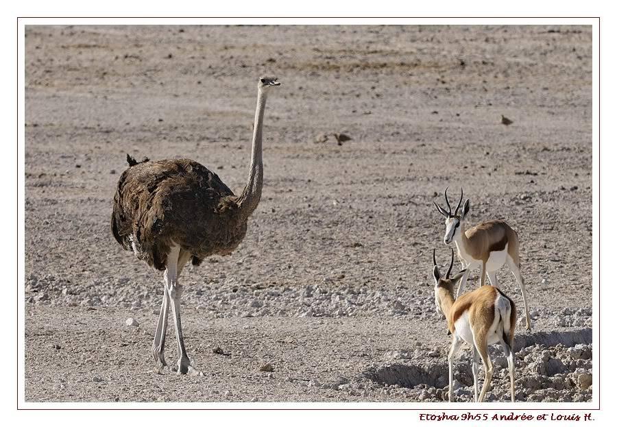 Aventures en Namibie Partie 2 : De Walvis Bay à Etosha _DSC6670PF