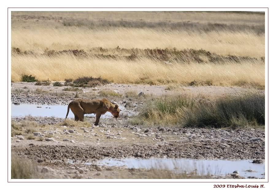 Aventures en Namibie Partie 2 : De Walvis Bay à Etosha _DSC6675PF