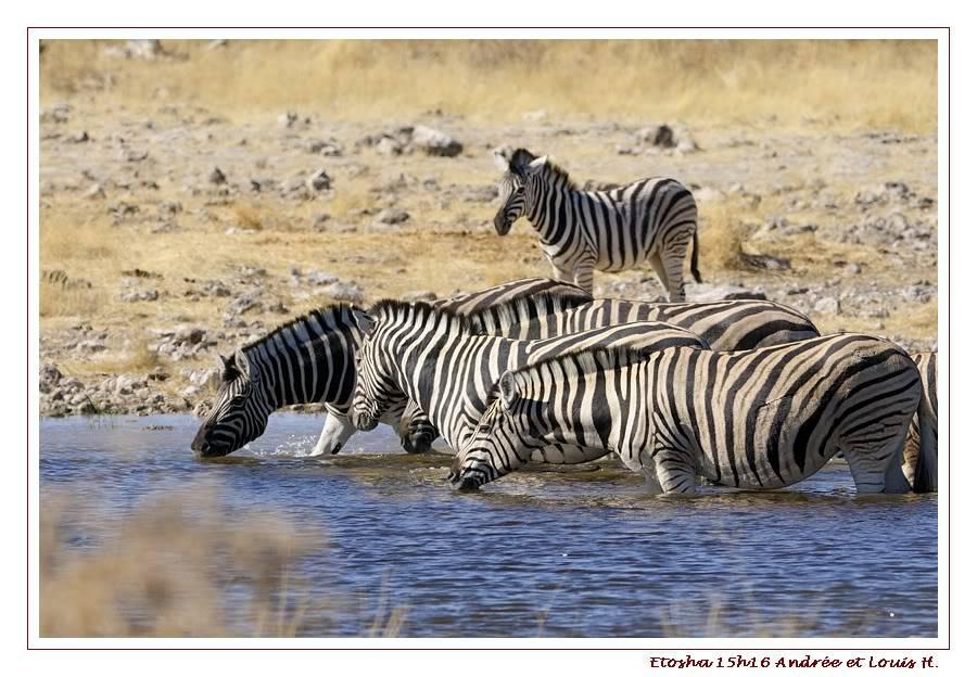 Aventures en Namibie Partie 2 : De Walvis Bay à Etosha _DSC6694PF