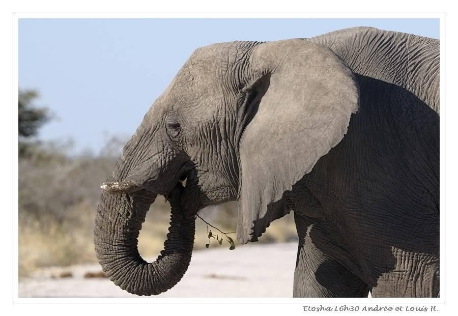 Aventures en Namibie Partie 2 : De Walvis Bay à Etosha _DSC6739PF