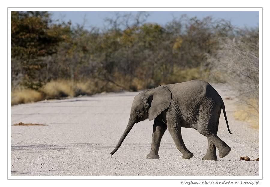 Aventures en Namibie Partie 2 : De Walvis Bay à Etosha _DSC6740PF