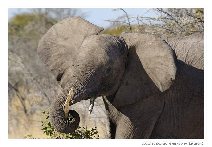 Aventures en Namibie Partie 2 : De Walvis Bay à Etosha _DSC6743PF