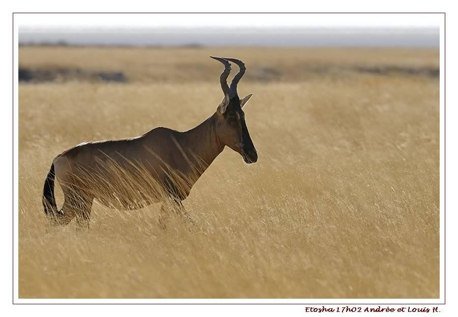 Aventures en Namibie Partie 2 : De Walvis Bay à Etosha _DSC6770PF