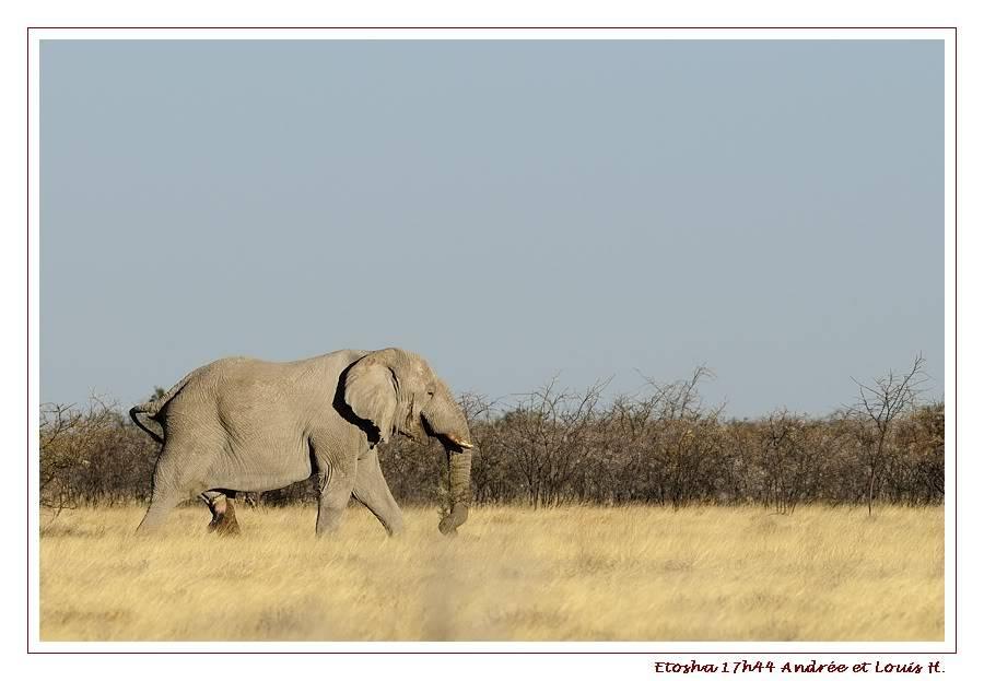 Aventures en Namibie Partie 2 : De Walvis Bay à Etosha _DSC6801PF