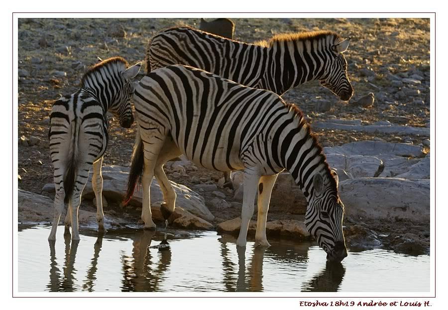 Aventures en Namibie Partie 2 : De Walvis Bay à Etosha _DSC6809PF