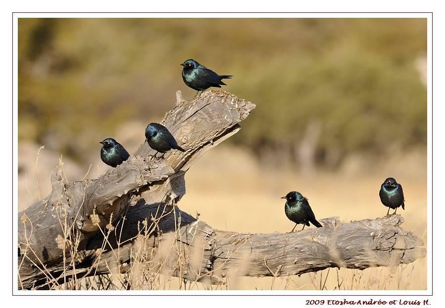 Aventures en Namibie Partie 2 : De Walvis Bay à Etosha _DSC6827pf