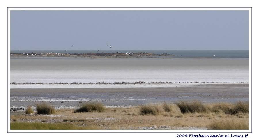Aventures en Namibie Partie 2 : De Walvis Bay à Etosha _DSC6852pf