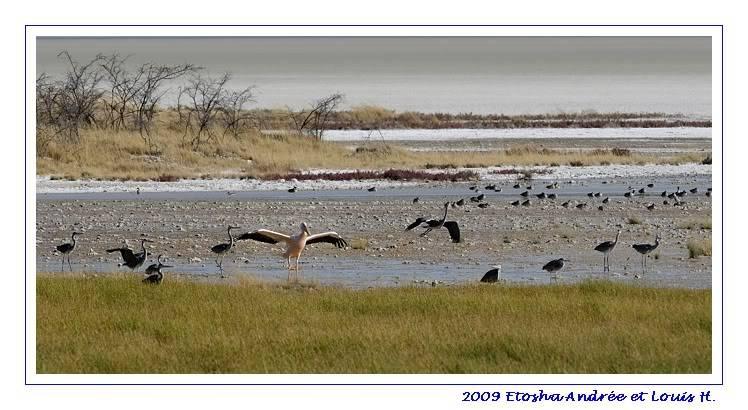 Aventures en Namibie Partie 2 : De Walvis Bay à Etosha _DSC6862pf