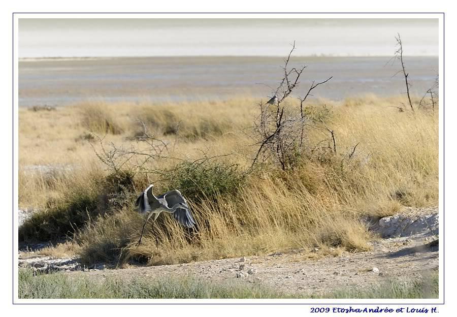 Aventures en Namibie Partie 2 : De Walvis Bay à Etosha _DSC6866pf